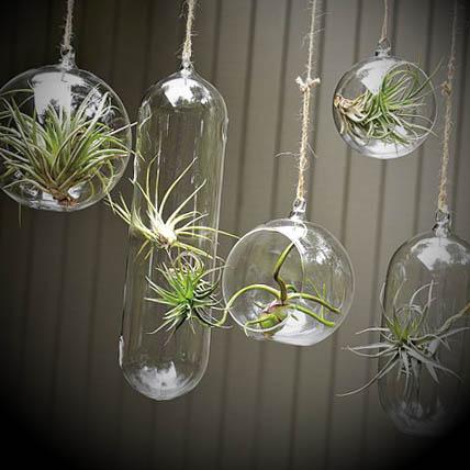 Vasos Decorativos em vidro