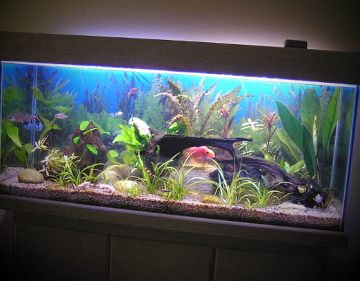 decoracao-aquarios