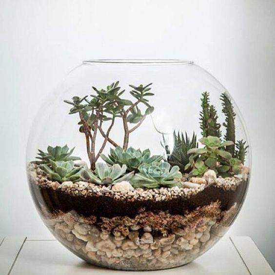 decoracao casa suculentas aquario vidro