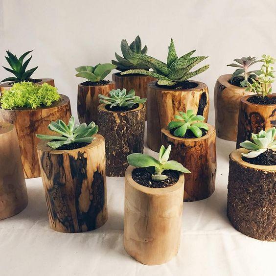 decoracao casa suculentas canas bambu