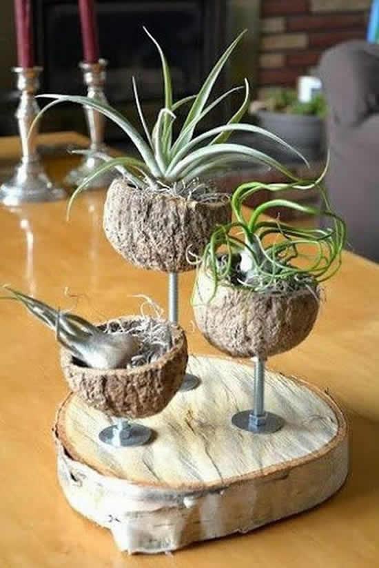 decoracao casa suculentas coco