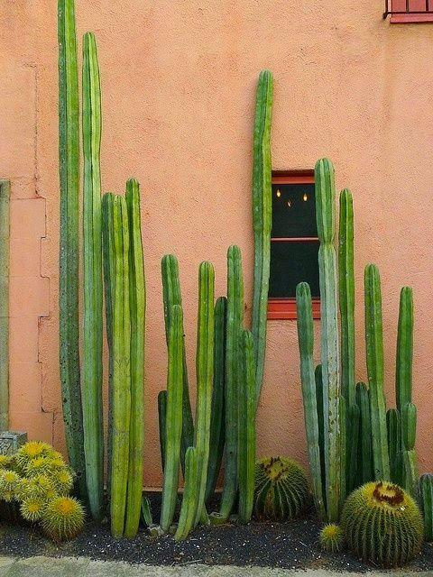 decoracao jardim externo plantas catos