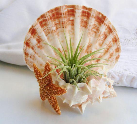decoracao suculentas concha