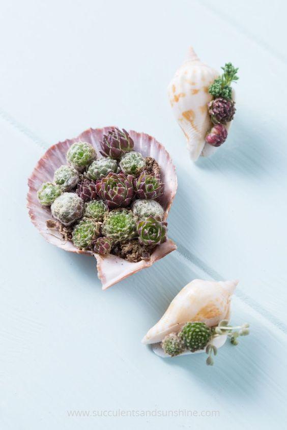 decoracao suculentas conchas composicao