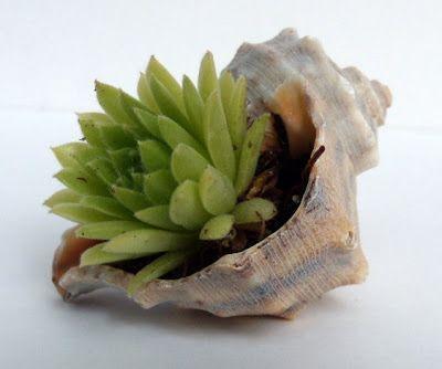 decoracao suculentas mini