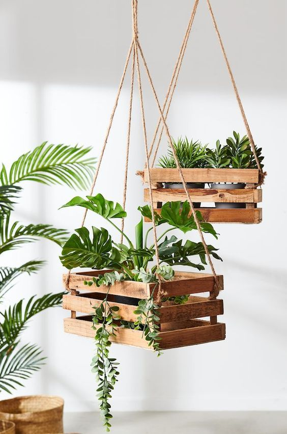 decorar com plantas suspensas 4