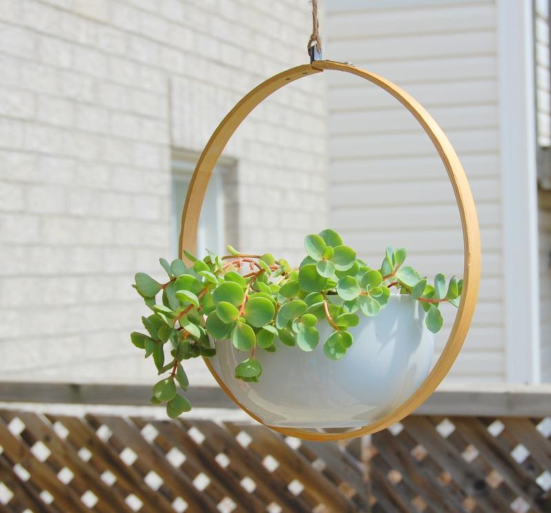 decorar com plantas suspensas 5