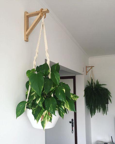 decorar com plantas suspensas 6