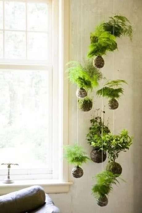 decorar com plantas suspensas 7