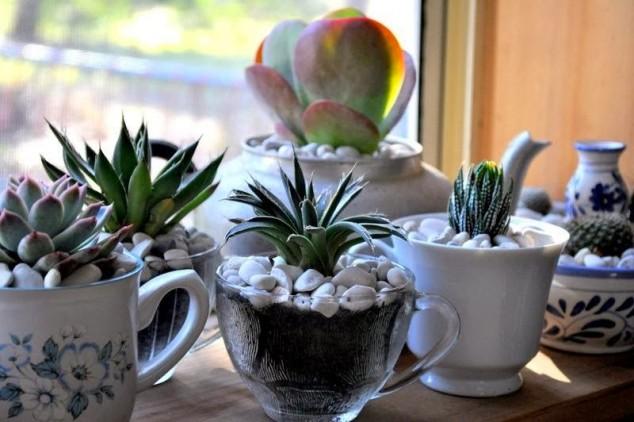 diy plantas em casa 11