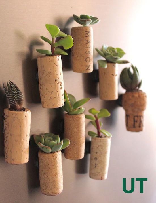 diy plantas em casa 16