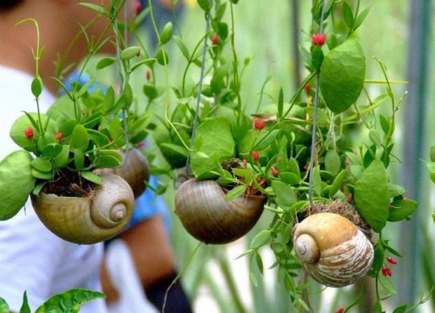 diy plantas em casa 5