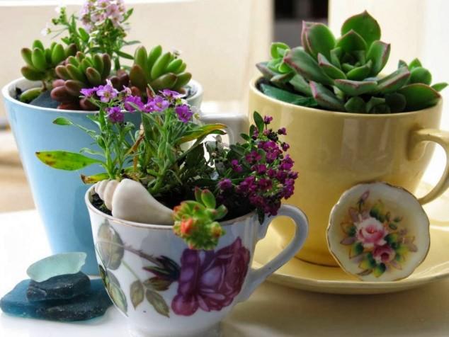 diy plantas em casa 8