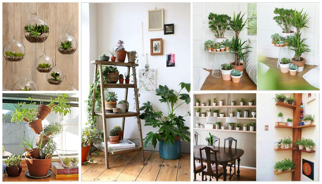 10 Ideias Criativas Para Expor As Plantas Dentro De Sua Casa