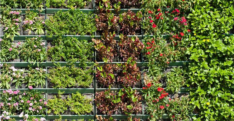 jardim vertical e solucao para falta de espaco