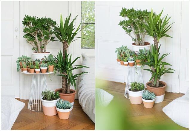 plantas dentro de casa 4