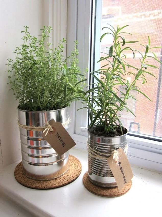 plantas dentro de casa 8