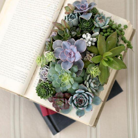 plantas plantadas livros 3