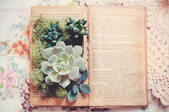 plantas plantadas livros 4