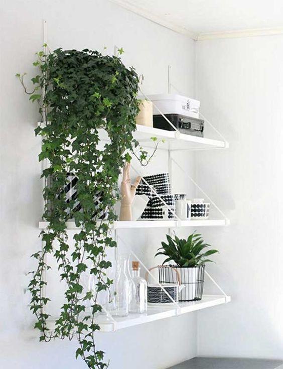 plantas purificam ar hera