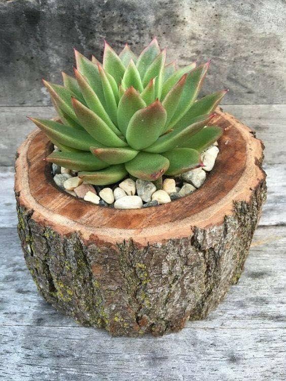 vasos criativos com tocos de madeira 6